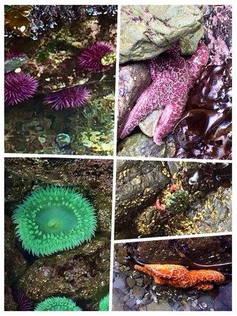 MacKerricher State Park: Sea creatures we saw
