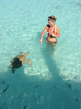 Augusta Bay Bahamas : Hard to find .. But there they are...