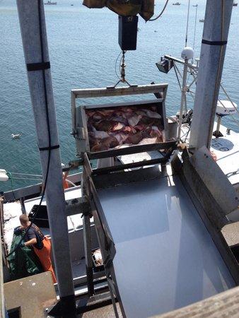 Chatham Pier and Fish Market: Incoming fish