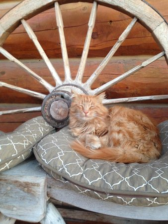 Echo Valley Ranch & Spa: One of the sweet cats at the ranch