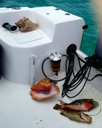 Bahamas Ocean Safaris: Conch and Spear fishing catch