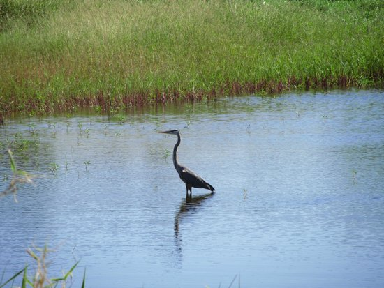 Myakka River State Park : from the birding walkway