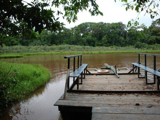 Refugio Amazonas: View towards the river
