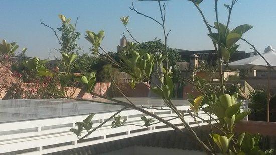 Riad Aloes: terraza impresionante con una gran tranquilidad