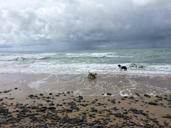 Sandymouth Beach: Four legged friends enjoying the water