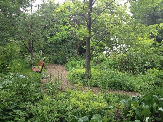 Linden Gardens: view along one walkway