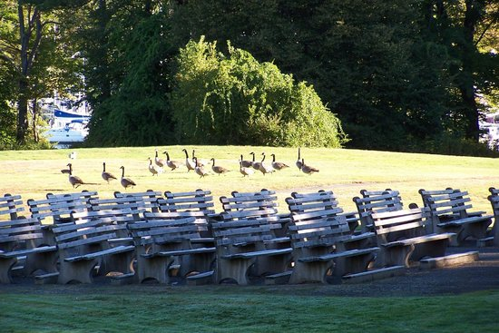 Franciscan Guest House : Geese visited us a few years back.