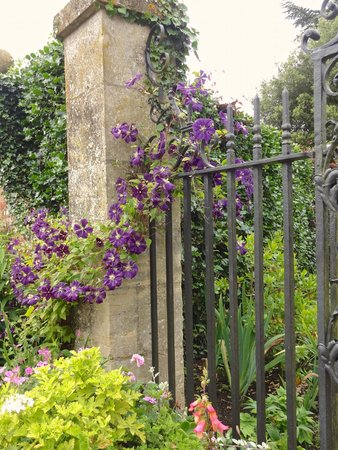 Hidcote Manor Garden: clematis