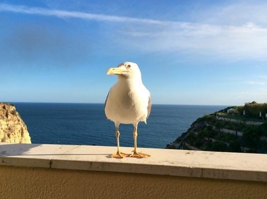 Tivoli Carvoeiro: our bird friend who visited our balcony daily.