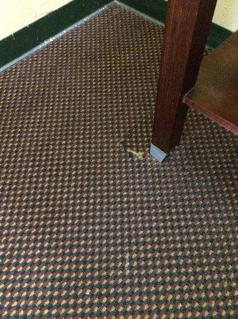 Village Inn of Destin: Tears in the carpet everywhere