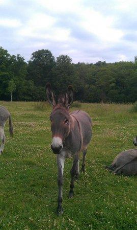La Reserve: pet donkey