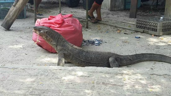 Tunku Abdul Rahman Marine Park: варан атакует :)