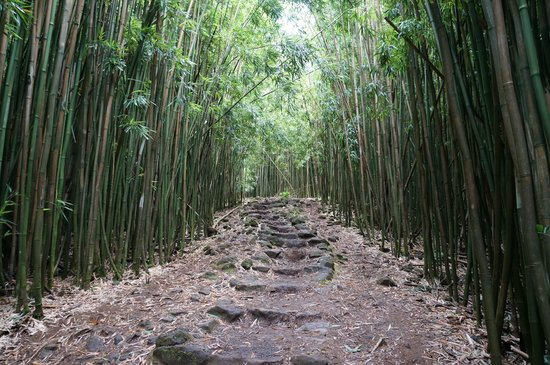 Pipiwai Trail : Bamboo Forest