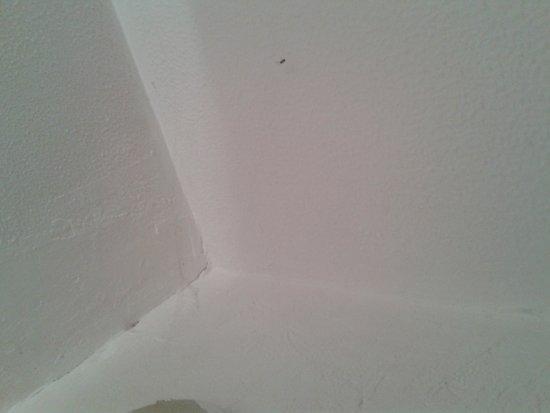 Hôtel de l'Aéroport : toile d'araignée salle de bains