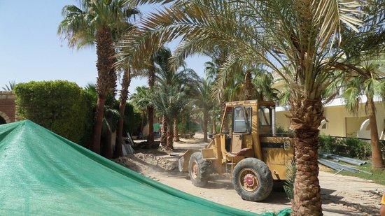 Aladdin Beach Resort: 9