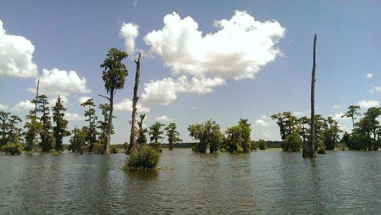Champagne's Cajun Swamp Tours: Landscape