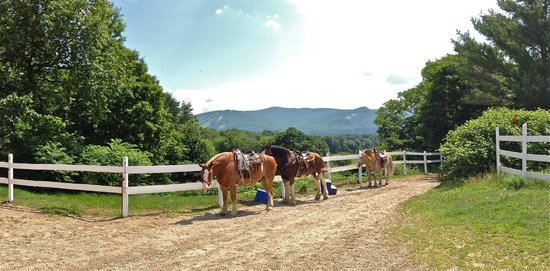 Stables at the Farm by the River: Bob, Lucy, and Charlie