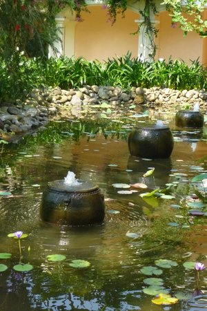 Anantara Hoi An Resort: the pond with a bullfrog