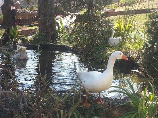 Riverview Spa: ... taking a swim