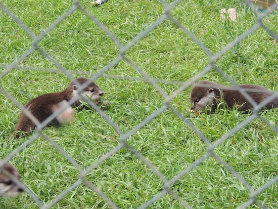 Tamar Otter and Wildlife Centre : Lunch time for the baby otters