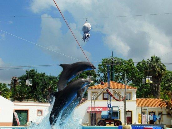 Lisbon Zoo (Jardim Zoologico de Lisboa): Espetáculo dos Golfinhos