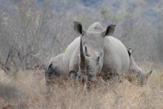 Mvubu River Lodge: Rhino Walk