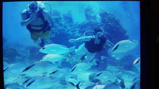 Cozumel Palace: Discover scuba