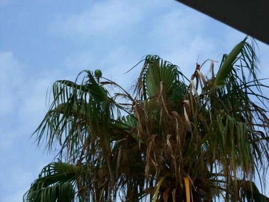 Apartamentos Barcarola Club: wido z tarasu na papugę :)