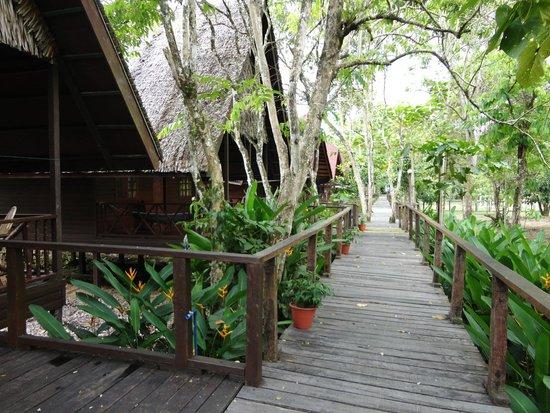 Bilit Rainforest Lodge: Walkway to Lodges