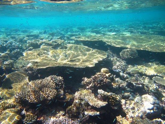 Vilamendhoo Island Resort & Spa : Great reef!