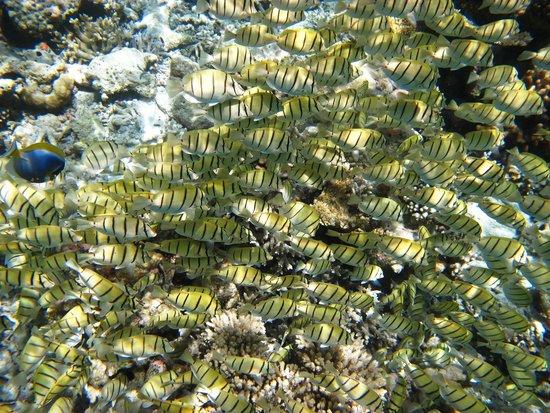 Vilamendhoo Island Resort & Spa : Fish soup!