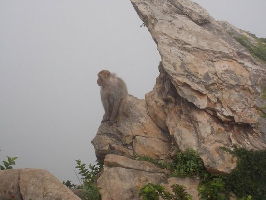 Mt Huaguoshan: wild monkey