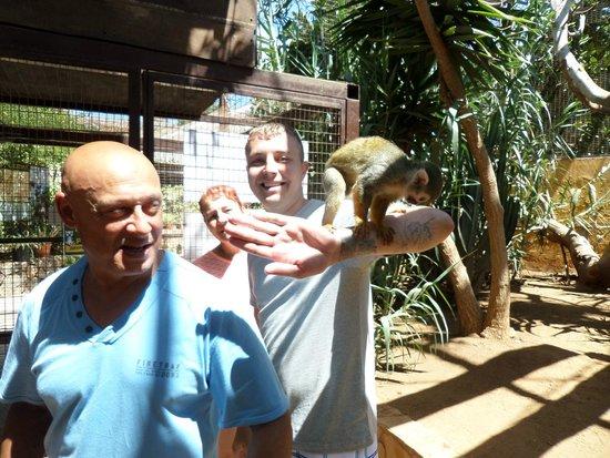Monkey Park : monkeys