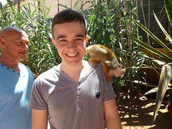 Monkey Park : monekys