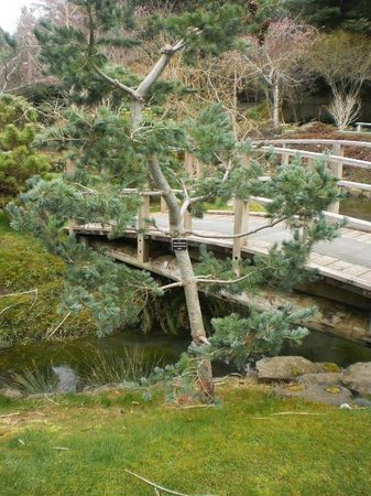 Bridge In Garden Amongst Bonsai Trees Picture Of Japanese Garden Mayne Island Tripadvisor