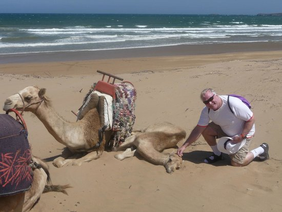 Sofitel Essaouira Mogador Golf & Spa: The beach beneath the sand dunes with friendly camels!