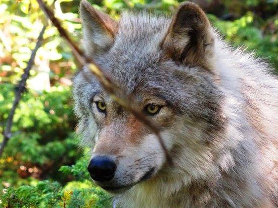 Northern Lights Wildlife Wolf Centre: Flora