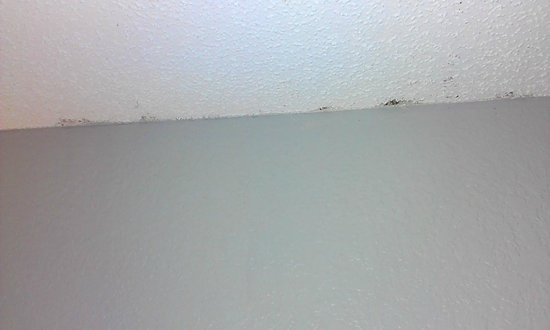 Quality Inn & Suites: mold in the room!!!!