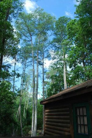 The Campsites at Disney's Fort Wilderness Resort : Surrounded by beautiful woods