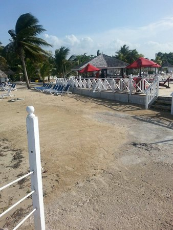 Royal Decameron Club Caribbean: Lots of creepy crawlers on this part of the beach, near the Grill