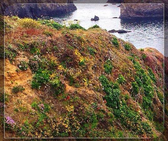 Mendocino Headlands State Park: Wild flowers