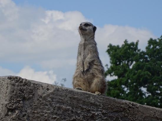 Longleat: on the lookout