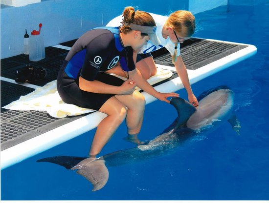 Clearwater Marine Aquarium : with Hope