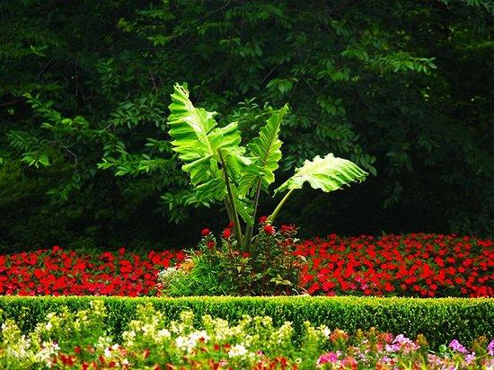 Arboreto y Jardín Botánico de Dallas: Summer at the Arboretum