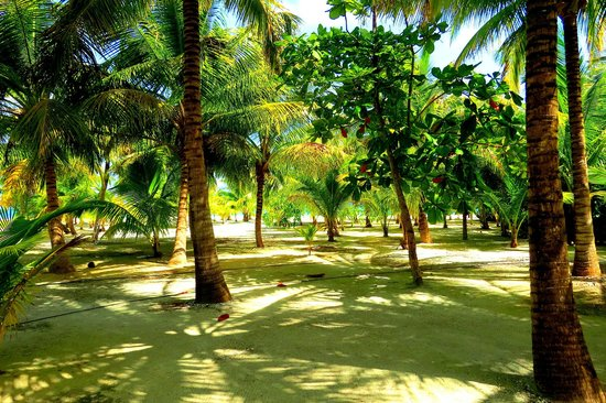 The Placencia Hotel and Residences : Beautiful grounds at Rendevous Key