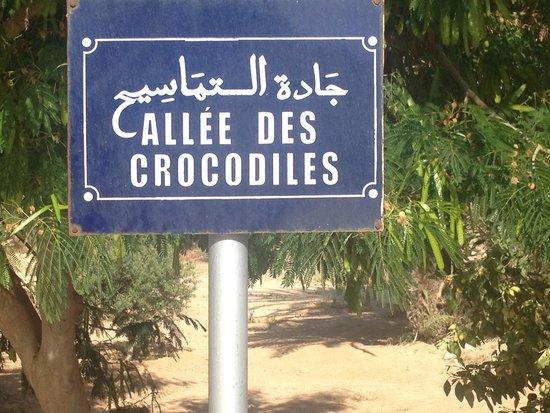Djerba Explore: Crocodile park