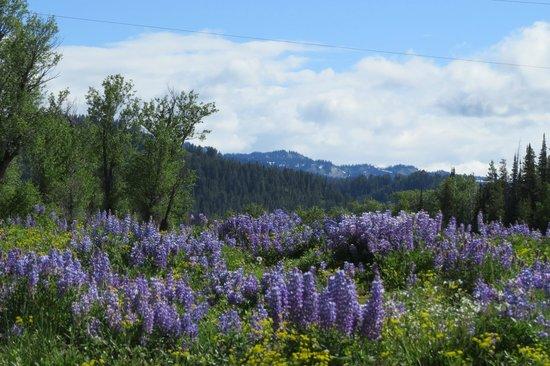 Teton Park Road: Wildflowers