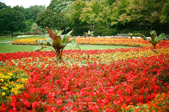 Arboreto y Jardín Botánico de Dallas: Summer Vista