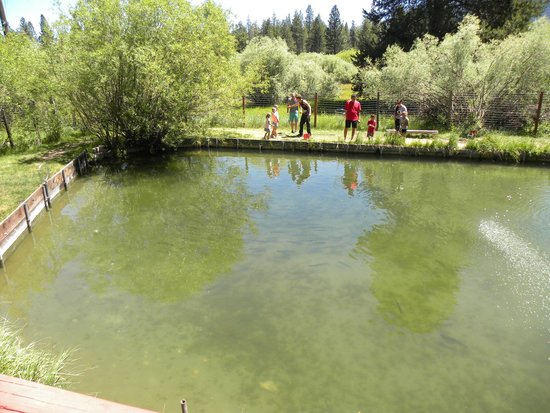 We got one picture of tahoe trout farm south lake for Trout farm fishing