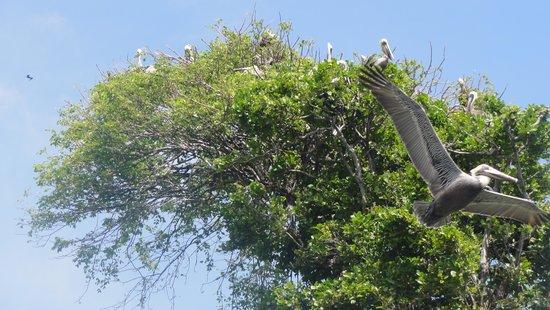 Grand Bahia Principe El Portillo : Amazing nature...